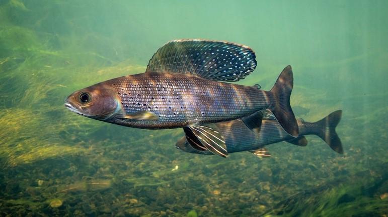 Image of Fish